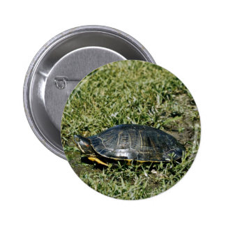 Painted Turtle Pins