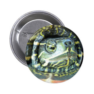 Painted Turtle (Chrysemys picta) 2 6 Cm Round Badge
