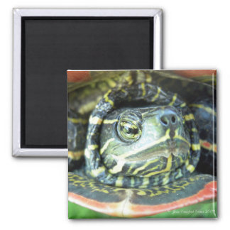 Painted Turtle (Chrysemys picta) 2 Refrigerator Magnet