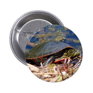 Painted Turtle (Chrysemys picta) 3 Pins