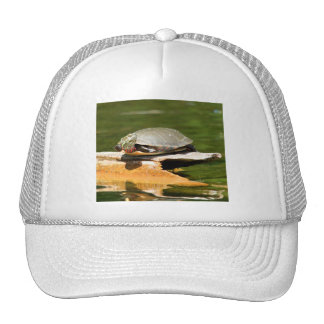 Painted Turtle Hat