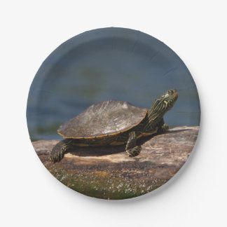 Painted turtle on a log 7 inch paper plate