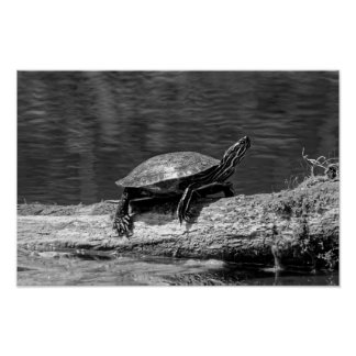 Painted Turtle on a Log (B&W) Poster