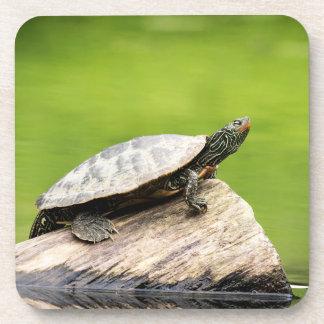 Painted Turtle on a log Coaster