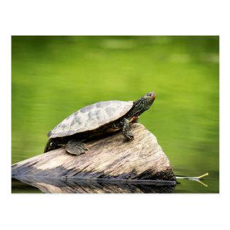Painted Turtle on a log Postcard