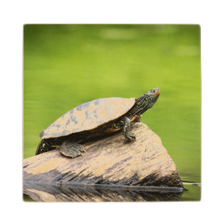 Painted Turtle on a log Wood Coaster