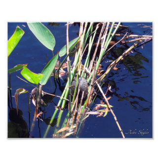 Painted Turtle Photo Print