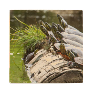 Painted Turtles Sunning Themselves In A Pond Maple Wood Coaster