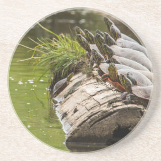 Painted Turtles Sunning Themselves In A Pond Sandstone Coaster