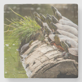 Painted Turtles Sunning Themselves In A Pond Stone Coaster
