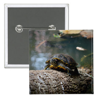 painted water turtle climbing log buttons