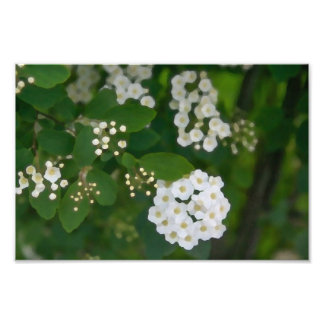 Painted white flower photo