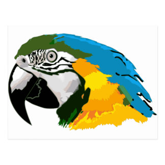 Painted Yellow Blue Macaw Parrot Postcard
