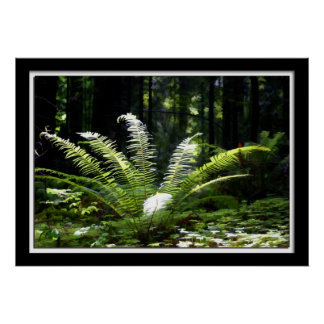 Painterly Lighted Fern Poster