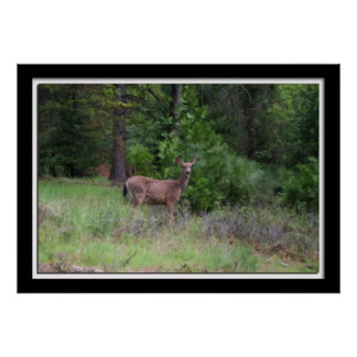 Painterly Photo of Deer in the woods Poster