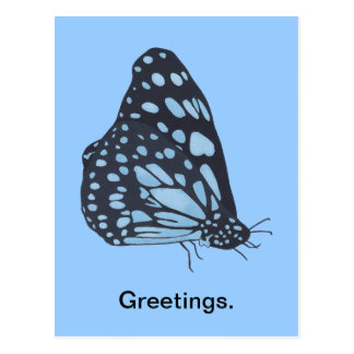 Painting Black Butterfly Blue Spots Postcards