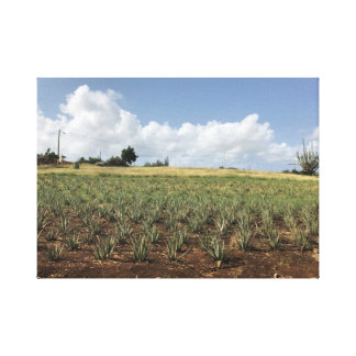 Painting of an aloe Vera plantation Canvas Print