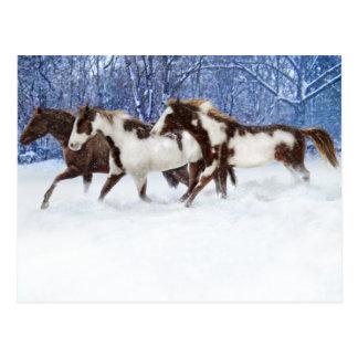 Paints In Winter Postcard
