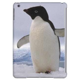 Pair Adelie penguins Antarctica