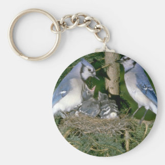 Pair of Blue Jays with young Key Ring
