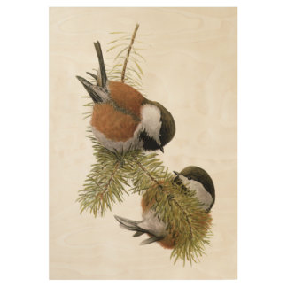 Pair of Chestnut-backed Chickadee on Pine Tree Wood Poster