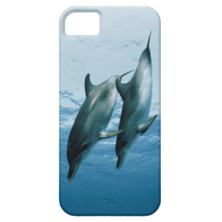 Pair of Dolphins iPhone 5 Cases
