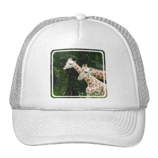 Pair of Giraffes  Baseball Hat