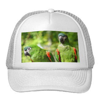 Pair of Green Parrots Hat