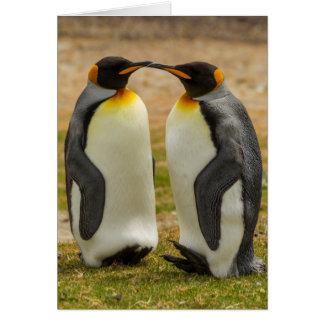 Pair of King Penguins, Falklands Card