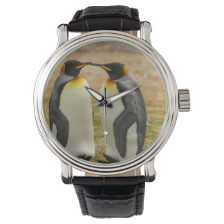 Pair of King Penguins, Falklands Watch