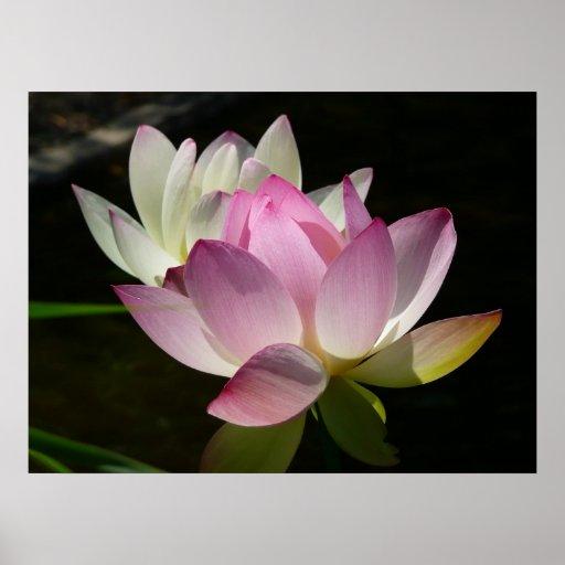 Pair of Lotus Flowers Print