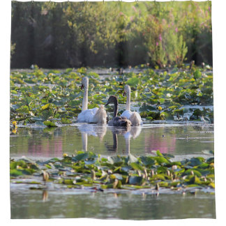 Pair of Mute Swans and cygnet Shower Curtain