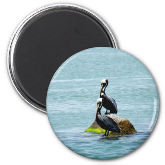 Pair of Pelicans Magnet