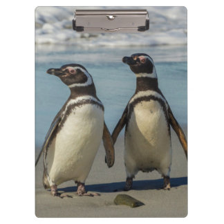 Pair of penguins on the beach clipboard