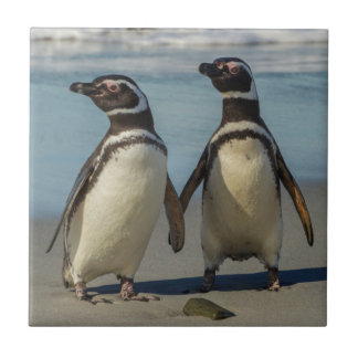 Pair of penguins on the beach tile