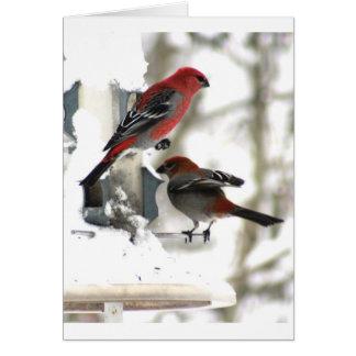 Pair of Pine Grosbeaks Card