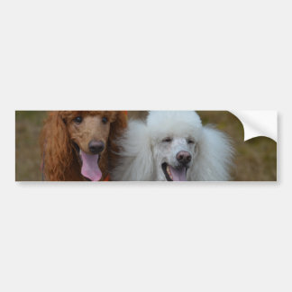 Pair of Poodles Bumper Sticker