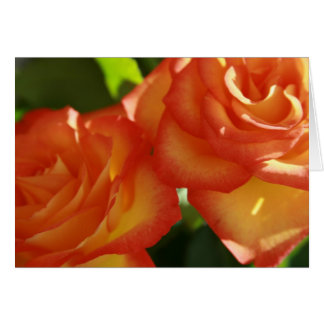Pair of Red-Yellow Roses Note Card