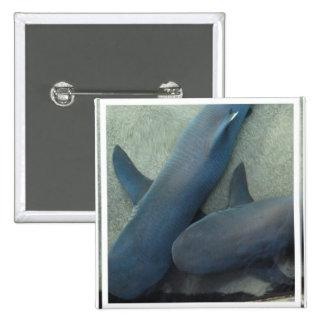 Pair of Sharks Pin