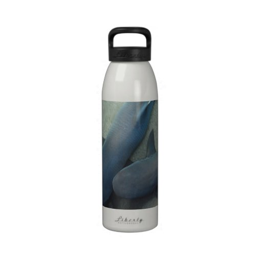 Pair of Sharks Water Bottle