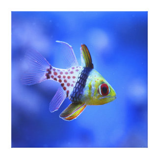 Pajama Cardinalfish - The Reef Collection Canvas Print