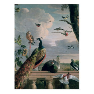 Palace of Amsterdam with Exotic Birds Postcard
