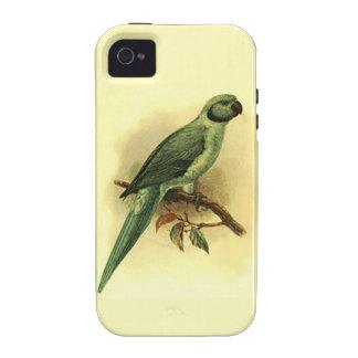 Palaeornis Exsul Case-Mate Vibe iPhone 4 Case
