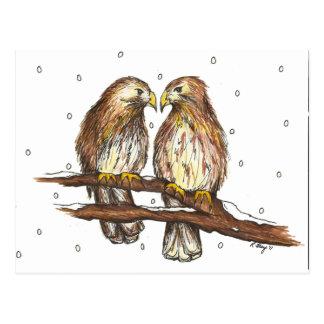 Pale Male Lola Red Tailed Hawk Bird Winter Snow Postcard