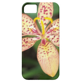 Pale orange spotted Blackberry lily Case For The iPhone 5