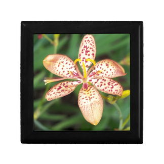 Pale orange spotted Blackberry lily Gift Box