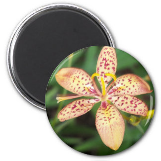 Pale orange spotted Blackberry lily Magnet