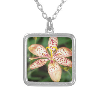 Pale orange spotted Blackberry lily Silver Plated Necklace