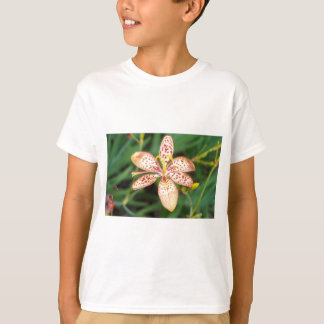 Pale orange spotted Blackberry lily T-Shirt