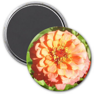 Pale Orange Zinnia Magnet